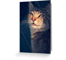 Tabs in the Shadows Greeting Card