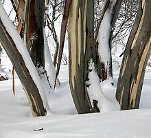 Snowgums, Perisher Valley NSW by Jan Glover