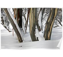 Snowgums, Perisher Valley NSW Poster