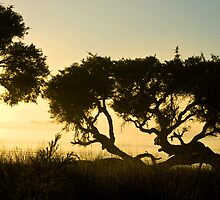Tree at Sunrise 2 by pennyswork
