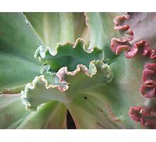 Succulent Ripple Photographic Print