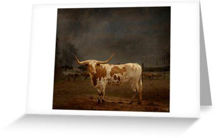 Texas Long Horn by Paul Vanzella