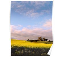 Lifting a Wilting Spirit - Canola Blossoms Around Saddleworth Church Poster