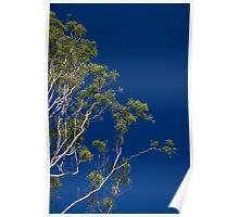 Gum tree on blue sky Poster