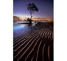 Everyones Tree Photographic Print