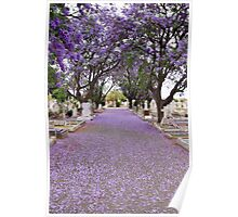 Purple Petals upon the Pavement Poster