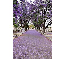 Purple Petals upon the Pavement Photographic Print