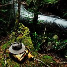 Down by the rain forest by oddoutlet