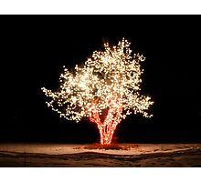 Chatfield Tree 19 Photographic Print