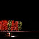 Chatfield Trees and Sleigh by greg1701
