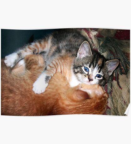 Cat Nap, Interrupted Poster