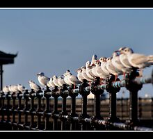 Seagull Parade - New Brighton Merseyside  by Dave Hepworth