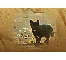 Small, sweet kitten Photographic Print