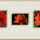Brilliant Orange Lillies Collage by KatsEye
