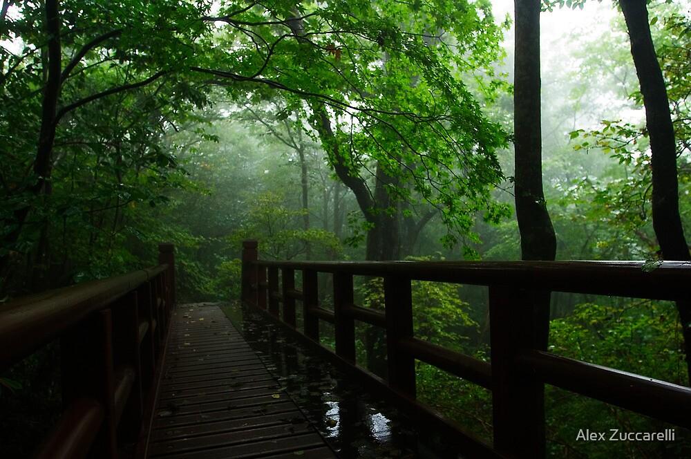 Misty Day - Jirisan National Park, South Korea by Alex Zuccarelli