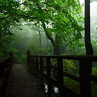 Misty Day - Jirisan National Park, South Korea by Alex Zuccarelli