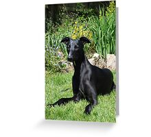 So beautiful...and i know it! Greeting Card
