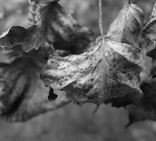 Grape Leaves- B&W by Tracy Faught