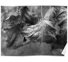 Grape Leaves- B&W Poster