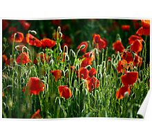 Poppies Remembered Poster