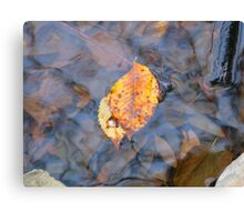 after their fall he sheltered her Canvas Print