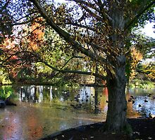 Autumn at the Pond by coffeebean