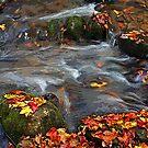 River~Dance by Terri~Lynn Bealle