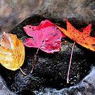 ~three leaves~ by Terri~Lynn Bealle