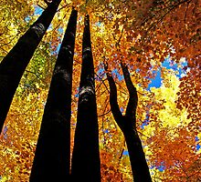 ~reaching for the sky~ by Terri~Lynn Bealle