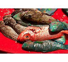 Reef Fish - Pohnpei, Micronesia Photographic Print