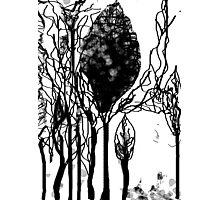 noel tree Photographic Print