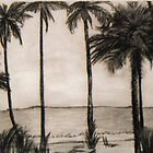 The Palms by Ms.Serena Boedewig