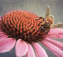 Bee on Echinacea by Louise Docker