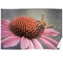 Bee on Echinacea Poster