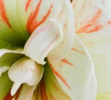 Flower Abstract Sticker