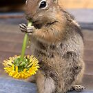 CHIPPY by Betsy  Seeton