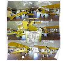 Yellow Tiger Moth Poster