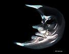 Brokenhearted Moon by RC deWinter