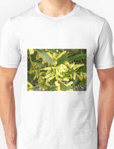 Acacia Longifolia (Sydney Golden Wattle)  Unisex T-Shirt