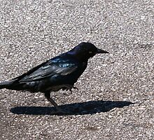 Blackbird and Asphalt by BCallahan