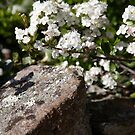 plant types #64, flowers & lichen by stickelsimages