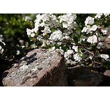 plant types #64, flowers & lichen Photographic Print