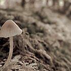 Mushroom growing on a fallen tree by chwells