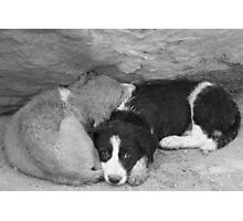 Stray dogs sheltering from rain under a ledge Photographic Print