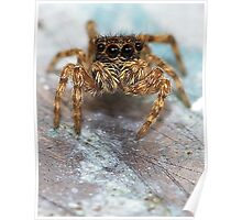 The itsy bitsy spider Poster