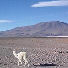 Llama by Timana