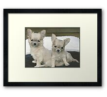 Cute brother and sister puppies. Framed Print