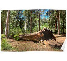 Fallen Timber Poster