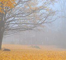 Foggy autumn scene by Wabacreek Photography