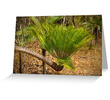 Cycad palm fronds in Kakadu NP, NT Greeting Card